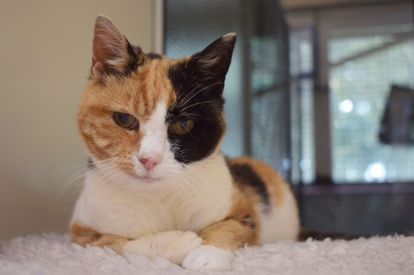 Cats Protection Glasgow Adoption Centre/Facebook